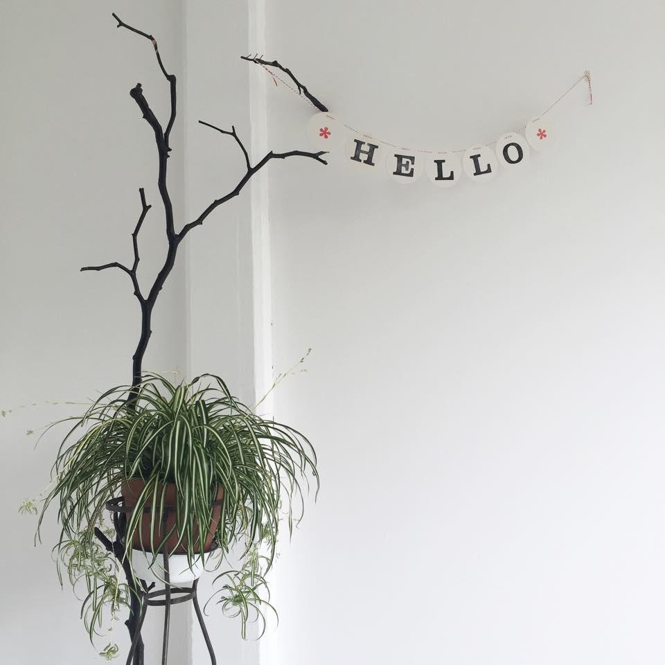 hello-studio-renna-deluxe